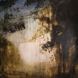 Wilderness – 2013 – 90×90 cm